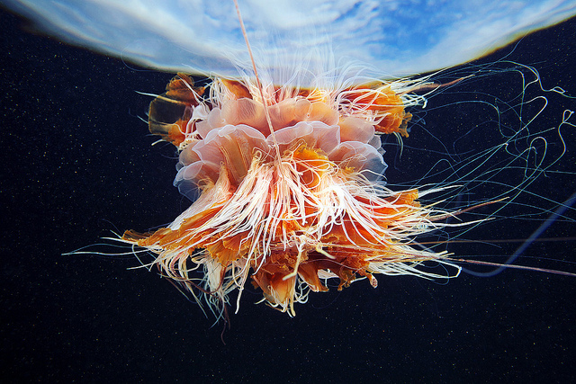 Jellyfish Photographed Against the Sky by Alexander Semenov (6)