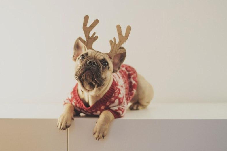 pug reindeer puppy