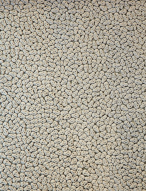 'What will you leave behind' - an art installation by Nino Sarabutra who filled a gallery floor with more than 100,000 miniature porcelain skulls that visitors would walk on. Words from the artist: