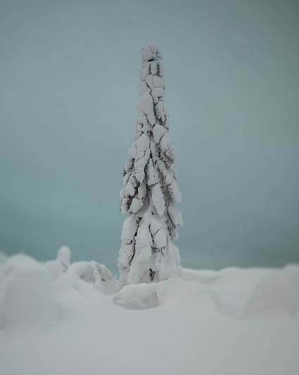 A frozen forest in Isosyötte, Finland captured by photographer Terry Gibbins (1)