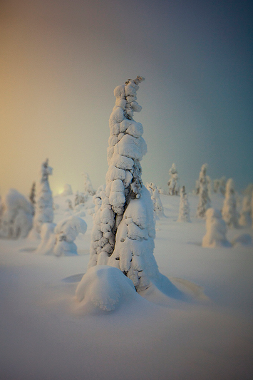 A frozen forest in Isosyötte, Finland captured by photographer Terry Gibbins (2)