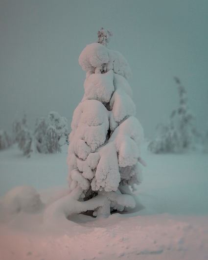 A frozen forest in Isosyötte, Finland captured by photographer Terry Gibbins (4)