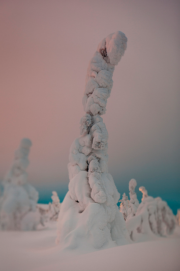 A frozen forest in Isosyötte, Finland captured by photographer Terry Gibbins (6)