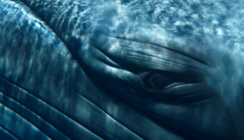 Unique close up photographs of whales by Martin Buber: