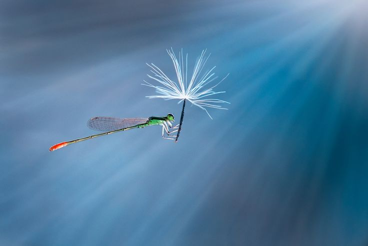 Nature's jetpacks. Photography by Nordin Seruyan (1)
