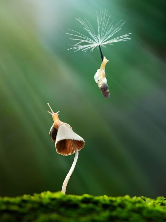 Nature's jetpacks. Photography by Nordin Seruyan (2)