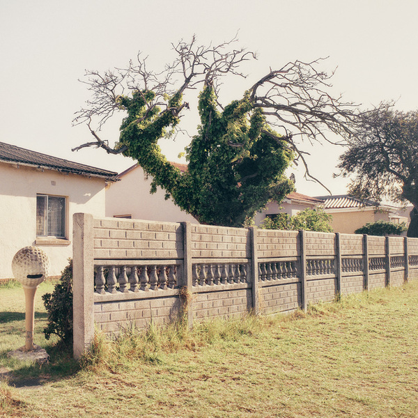 Beautiful photographs from the series 'Limbo' by South African photographer Dillon Marsh. Words from his website:  Limbo is a series of photographs showing trees that have died, but not yet fallen. All these trees were photographed in various suburbs of the Cape Flats area of Cape Town, including Bridgetown, Bonteheuwel, Ruyterwacht, Windermere, and The Hague.