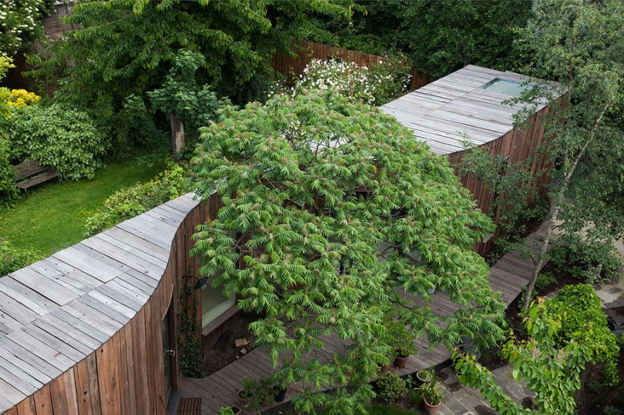 Tree House by 6a architects (6)