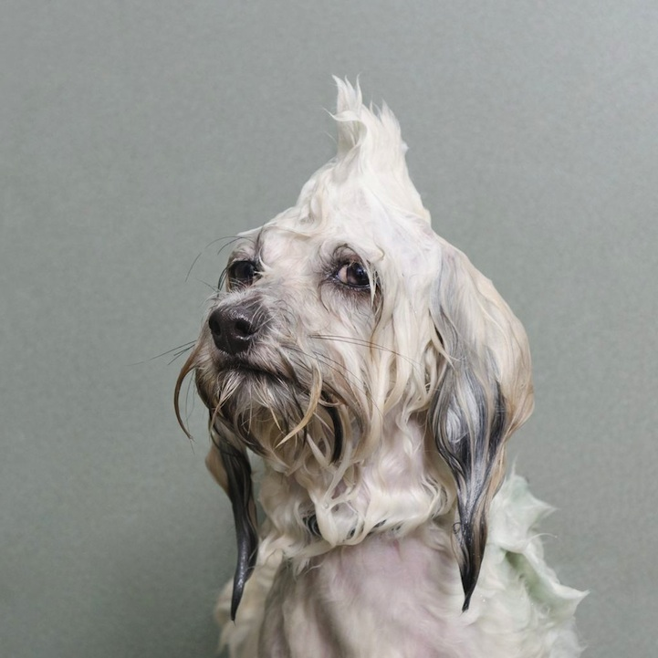 Wet Dog by Sophie Gamand (1)