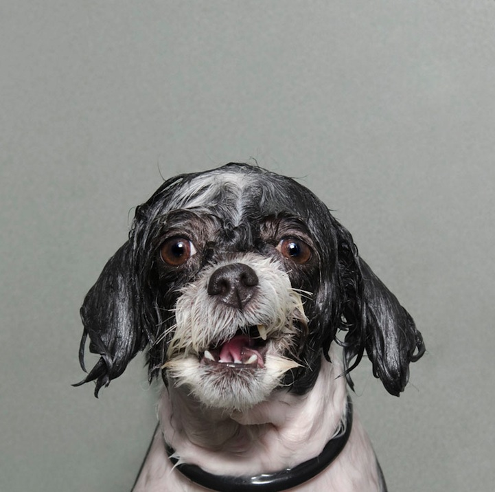 Wet Dog by Sophie Gamand (3)
