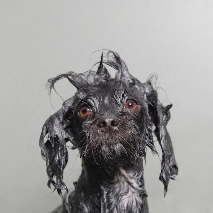 wetdog21