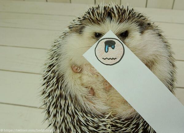 hedgehog 5