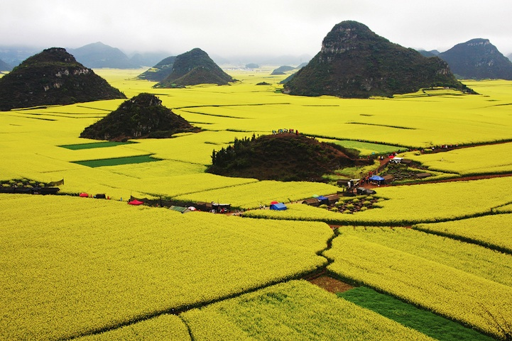 Ocean of Flowers in Luoping, China (6)