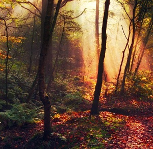 Wandering in the Woods, Oer-Wout (3)