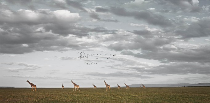 klaus tiedge photographs the wildlife in namibia, botswana and kenya (1)