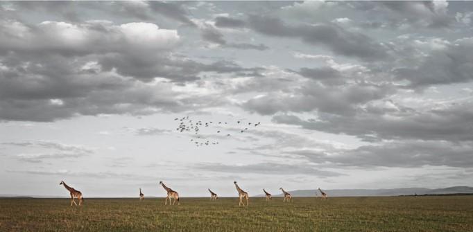 klaus tiedge photographs the wildlife in namibia, botswana and kenya (1)