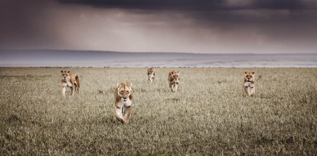 klaus tiedge photographs the wildlife in namibia, botswana and kenya (3)