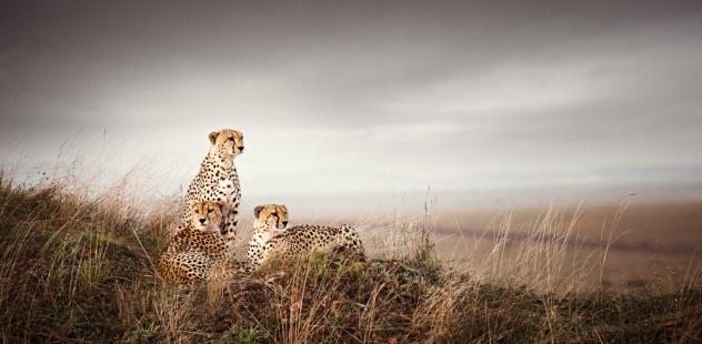 klaus tiedge photographs the wildlife in namibia, botswana and kenya (4)