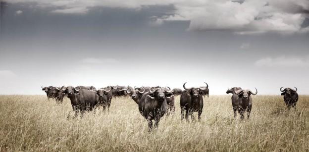 klaus tiedge photographs the wildlife in namibia, botswana and kenya (5)