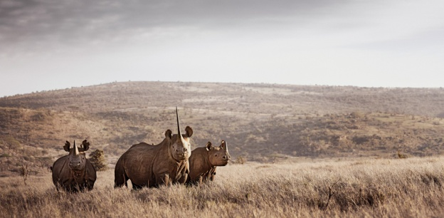klaus tiedge photographs the wildlife in namibia, botswana and kenya (6)