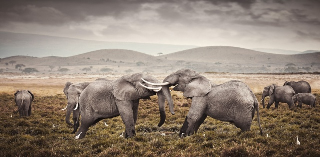 klaus tiedge photographs the wildlife in namibia, botswana and kenya (7)