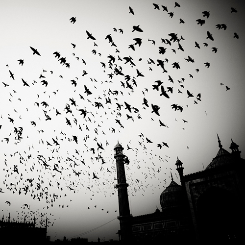 India by Josef Hoflehner (4)