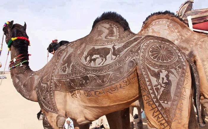 the indian city of bikaner host an annual camel festival in january. the designs are the results of trimming and dying the camel hair. photos steve hoge and osakabe yasuo (1)