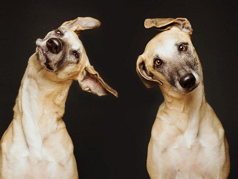 Absurdly Expressive Dog Portraits by Elke Vogelsang (4)