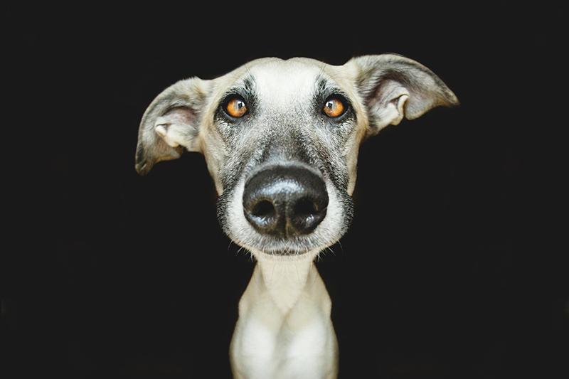 Absurdly Expressive Dog Portraits by Elke Vogelsang (5)