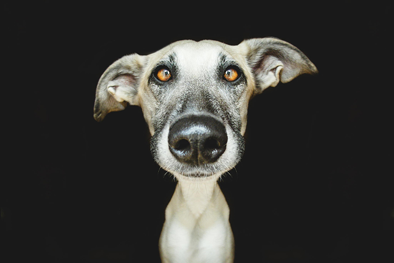 Absurdly Expressive Dog Portraits by Elke Vogelsang (5)