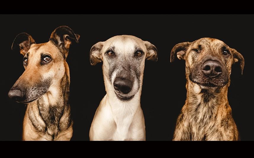 dogs-gang-dnr_2863298k
