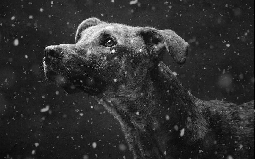 DOGS-WONDERLAND-DN_2863313k