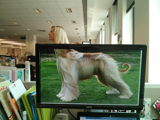 Office Safari (3)