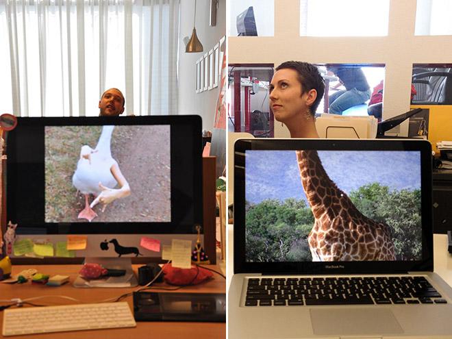 Office Safari (6)
