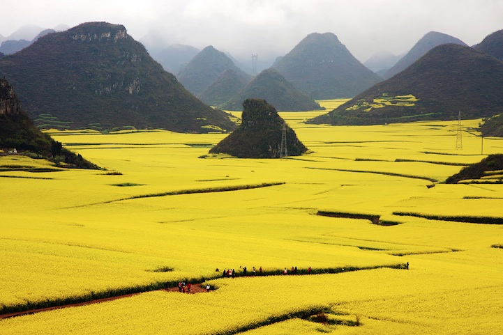 Ocean of Flowers in Luoping, China (1)